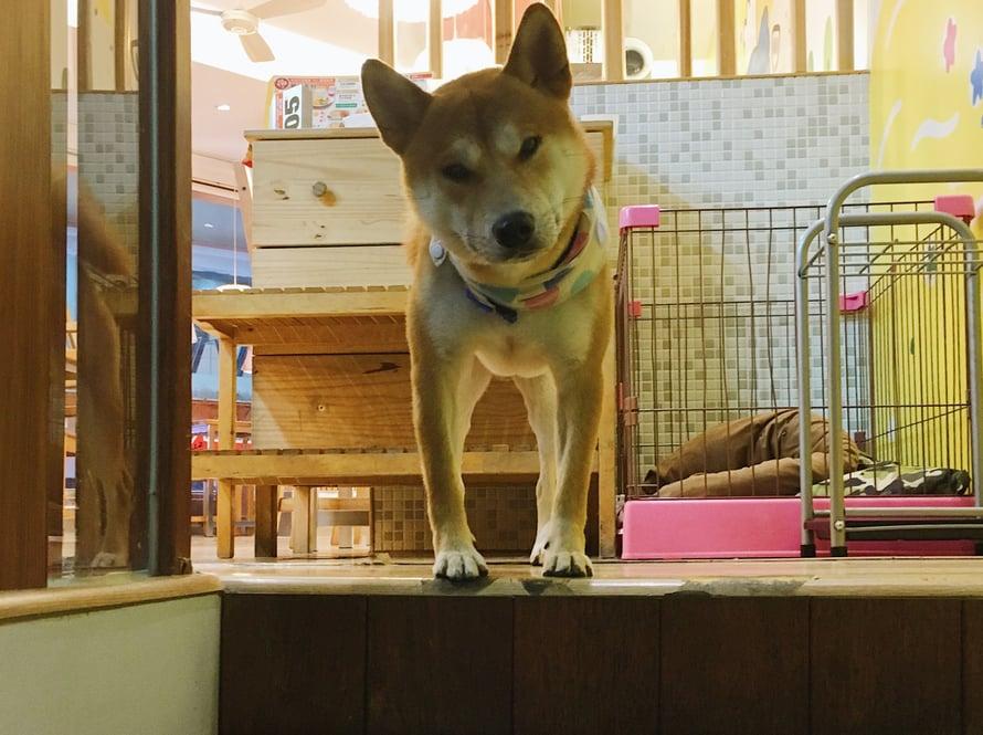 Hiro katseli päivittäin pastaravintolan portailta vilkkaa Ximenin menoa ja tervehti asiakkaat hillitysti.