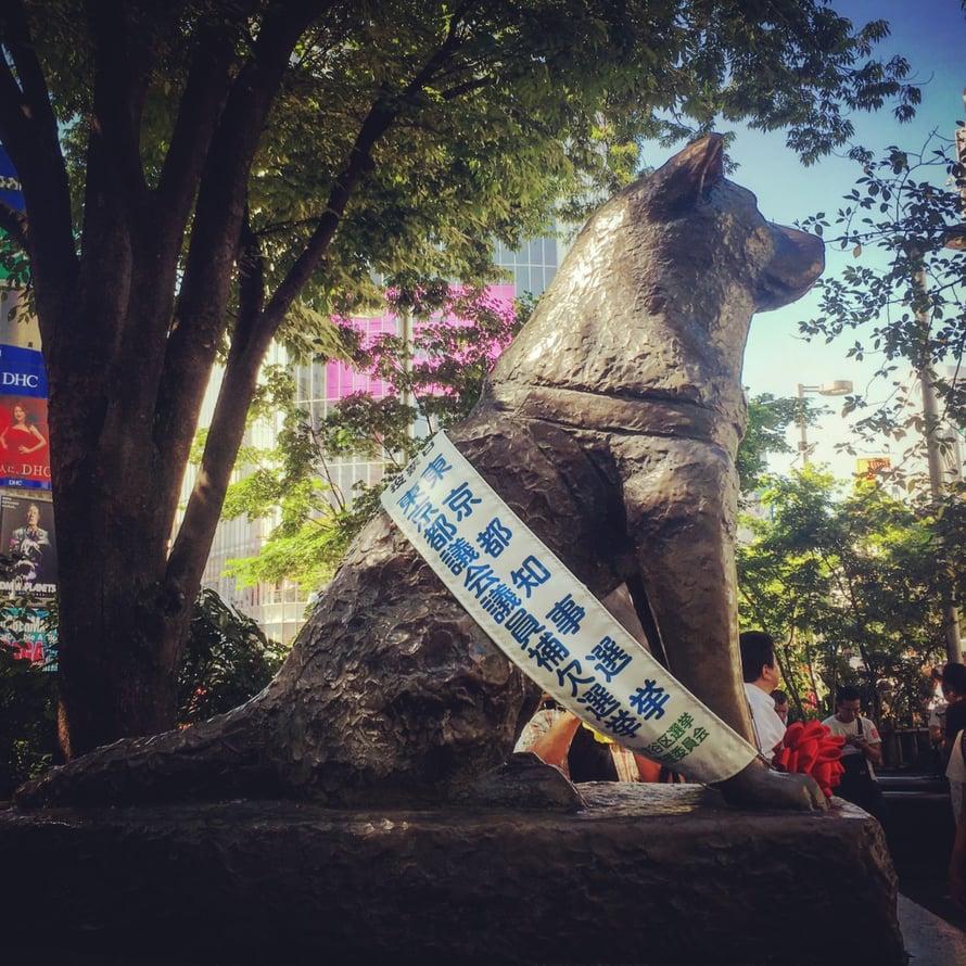 Elokuussa 2016 ei näkynyt kissoja Hachikon-patsaalla.