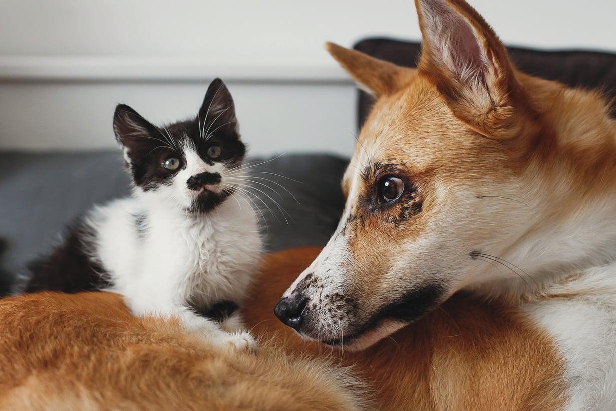 Muistutatko kenties kissaa tai koiraa?