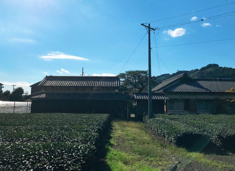 Shizuokalaiset lähiömaisemat ja oma teeviljelmä pihalla.