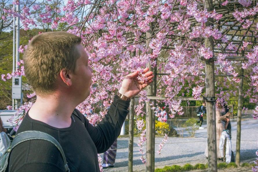 Osakan hanamia keväällä 2018.