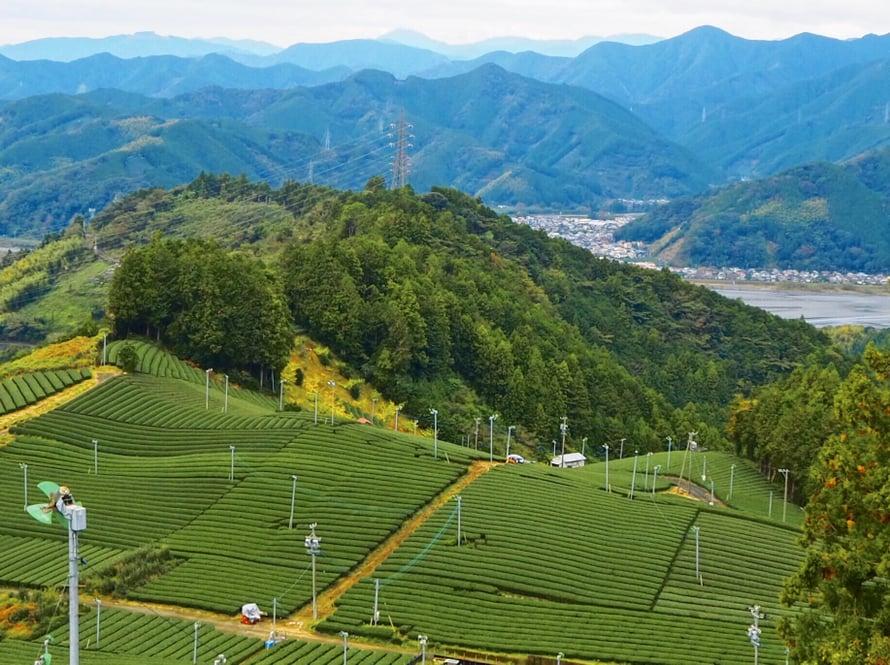 Shizuokan ihmiset juovat teetä joidenkin tilastojen mukaan eniten Japanissa.