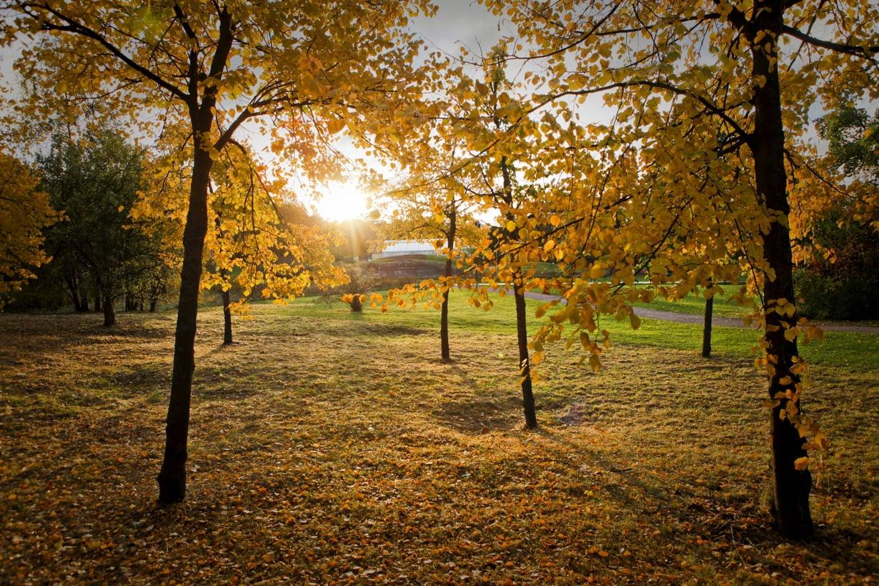 Lempeä lokakuu – kuka siitä nyt ei tykkäisi?