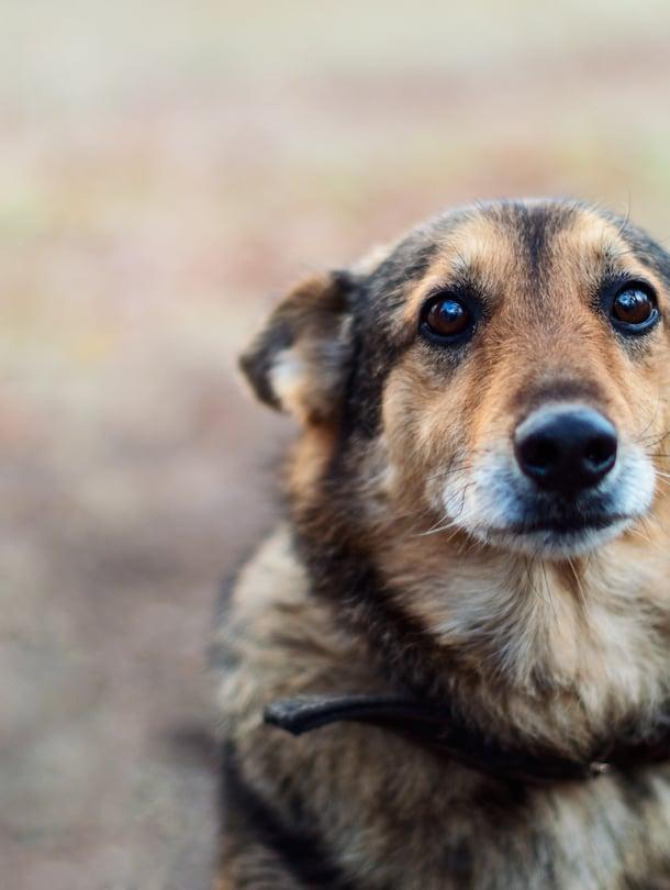 Koirasta saatetaan joutua luopumaan myös esimerkiksi allergian tai elämäntilanteen muuttumisen vuoksi.