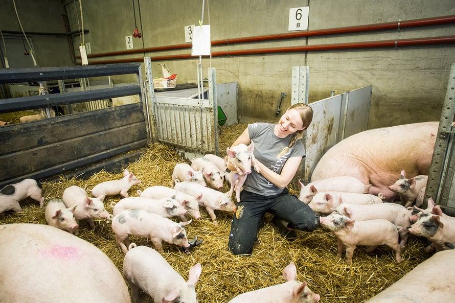 Veera Ollikkala pitää sikojen hoidosta. Emakoista ehtii tulla eräänlaisia työkavereita.