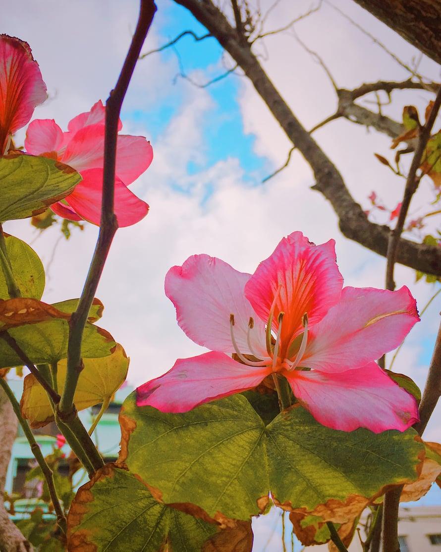 Joskus pitää pukea vaatteet ylle ja siirtyä kirjoituspaikkaan, eikä silloin voi työskennellä enää pää tyhjänä. Mutta esimerkiksi kukkien tuijottelun jälkeen on helpompi alkaa kirjoittaa, kuten kävi tässä japanilaisessa puutarhassa.
