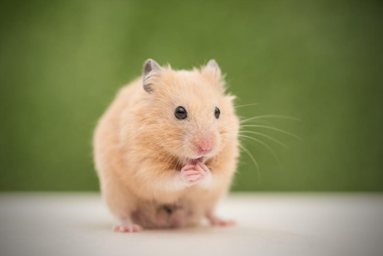 Älä huoli, vaikka tuntisit itsesi varsinaiseksi hamsteriksi: Tavarasta luopumista voi myös harjoitella.