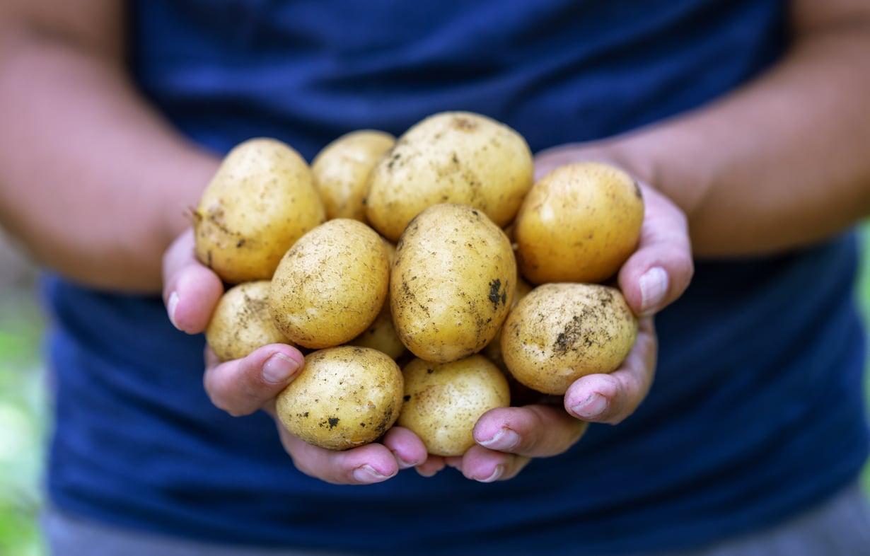 Multaa ei tarvitse syödä, mutta vihanneksia ei aina tarvitsisi hangata ihan puhtaiksi, sanoo asiantuntija.