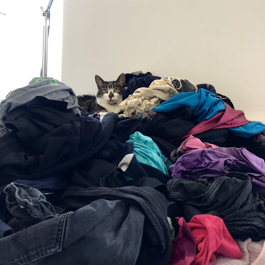 Löydä kuvasta tyytyväinen kissa.