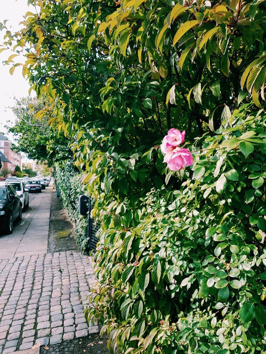 Kööpenhamina dating kohtaus dating skriptejä määritelmä