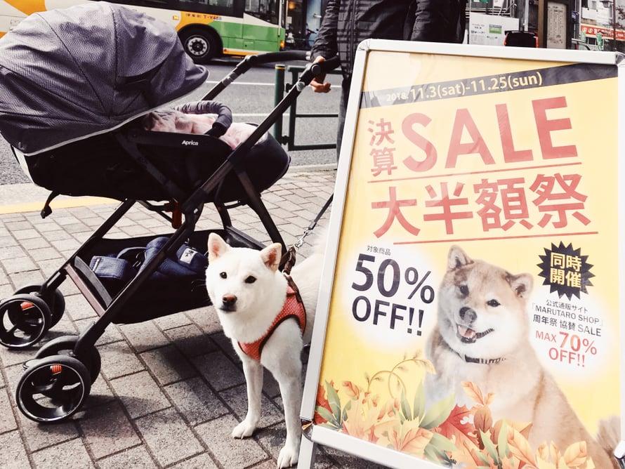Valkoinen pieni shiba inu tuli moikkaamaan Marun kaupan eteen.