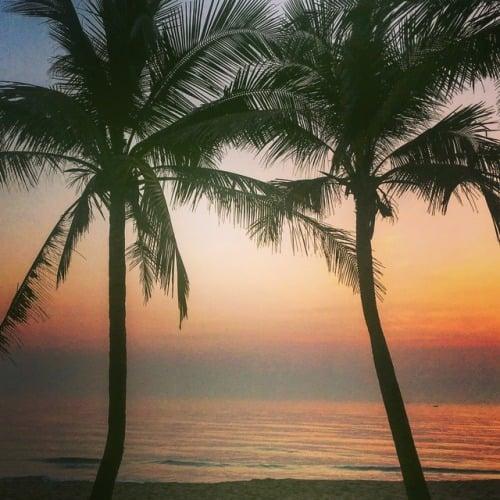 Vietnamin palmuja.