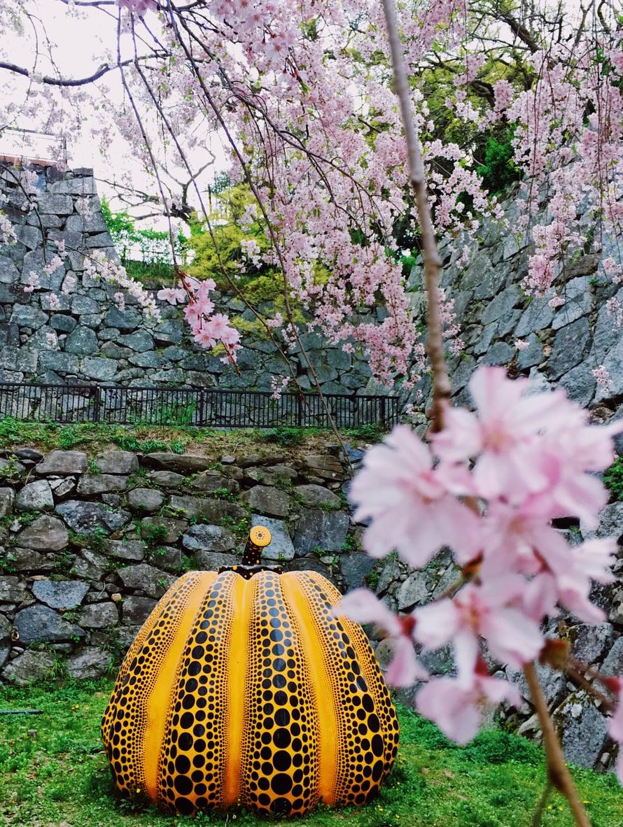 Kusaman kurpitsahan se siinä. Fukuokan täydellisessä hanamissa keväällä 2018. Voi niitä aikoja ja voi tätä paikkaa. Voisin kirjoittaa niin monta tarinaa, jotka liittyvät tähän puistoon. <3
