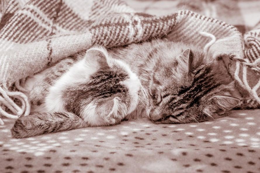 Ihmisistä kasvokkain puolisonsa kanssa nukkuu vain muutama prosentti.