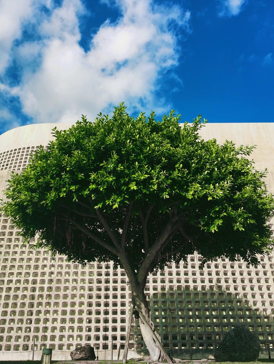 Okinawan taidemuseon edessä on kaunis puutarha. Se inspiroi moniin teksteihin!