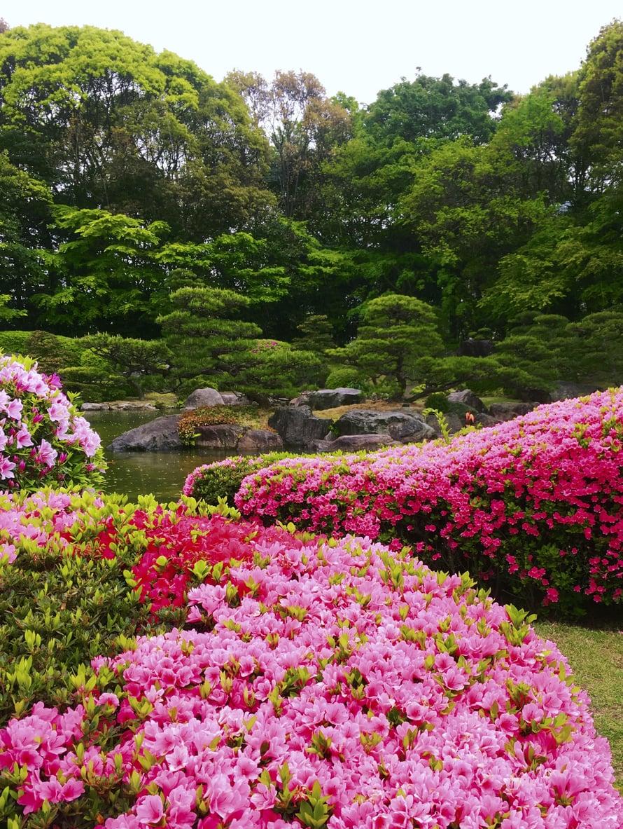 Japanilainen Teeseremonia