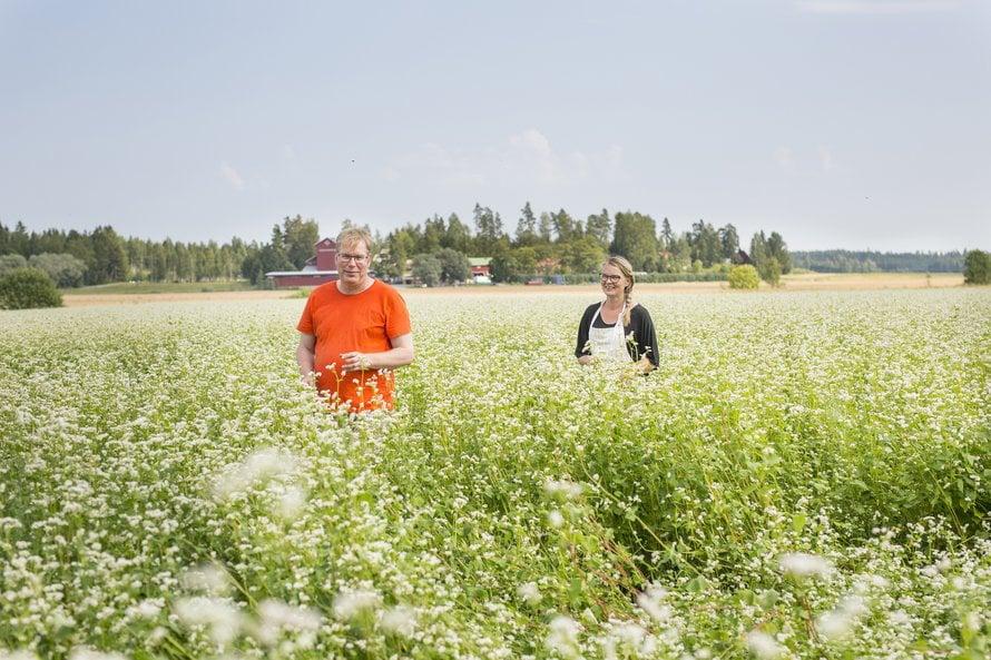 Viime kesä on ollut Eeroloillakin ankea, vaikka tattaripelto kukki kauniisti.