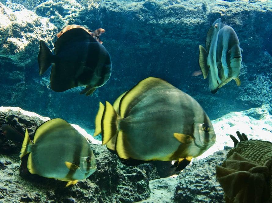 isompi kala meressä dating site