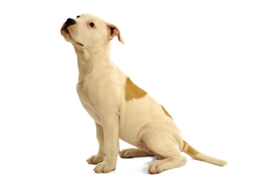Koira Piereskelee