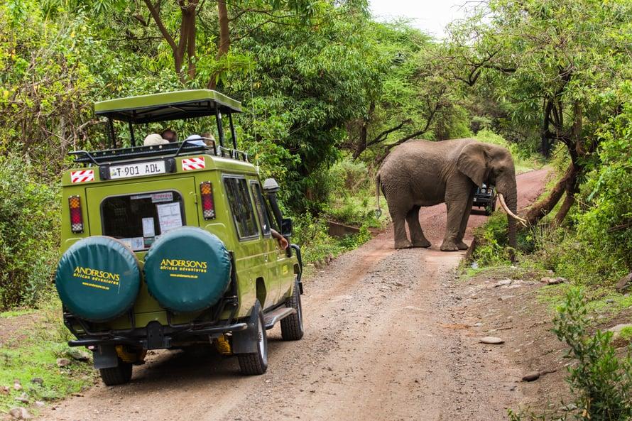 Kamerat lauloivat, kun norsu pysähtyi keskelle tietä juomatauolle.