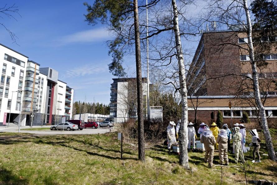 Risteys Espoossa on aivan hyvä paikka mehiläisille.