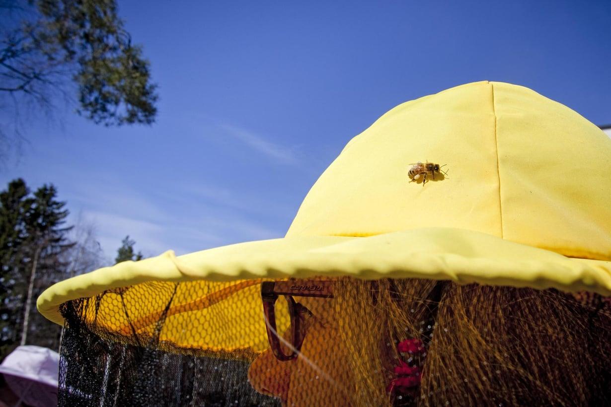 Kohta syntyy hunajaa. Kuvat: Susanna Kekkonen