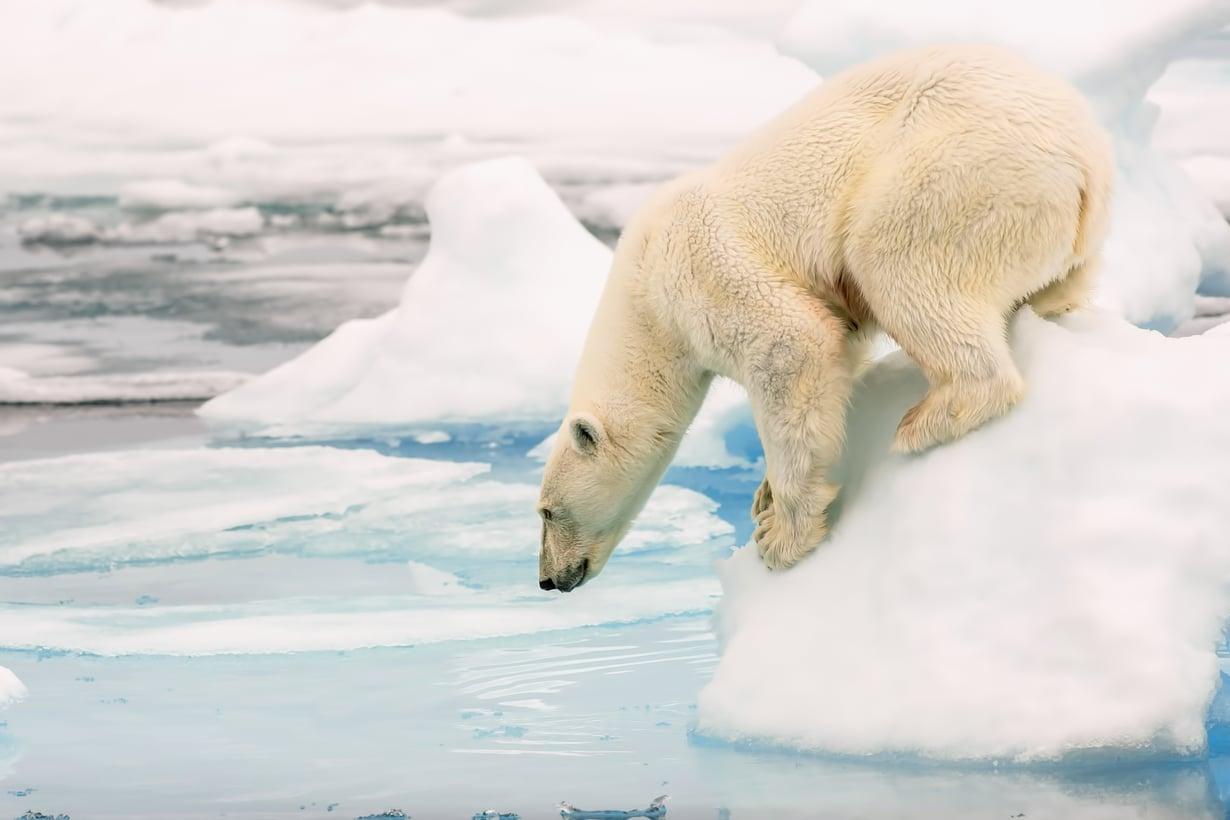 Kun vartalossa on hieman rasvaa, vedessä ei palele niin kovasti. Kuva: Shutterstock