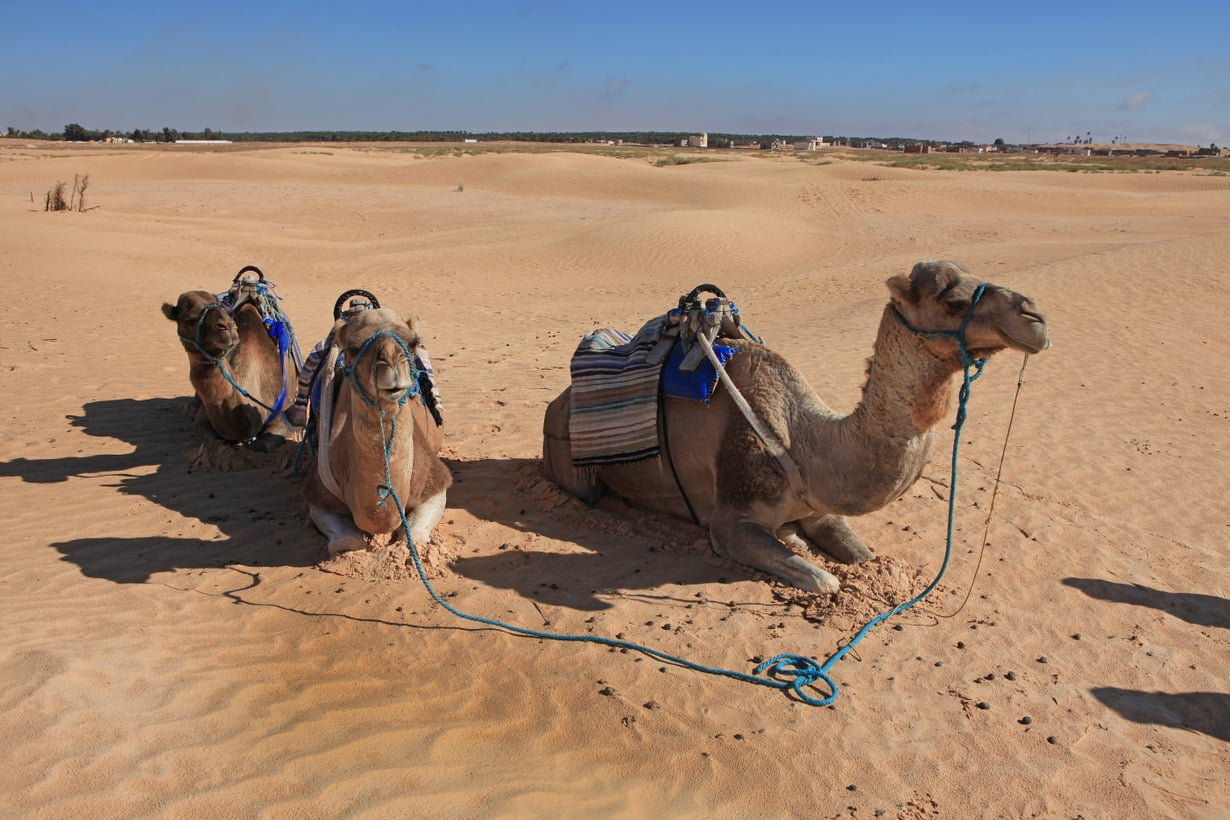 Tunisiassa pääsee halutessaan ratsastamaan kamelillakin.