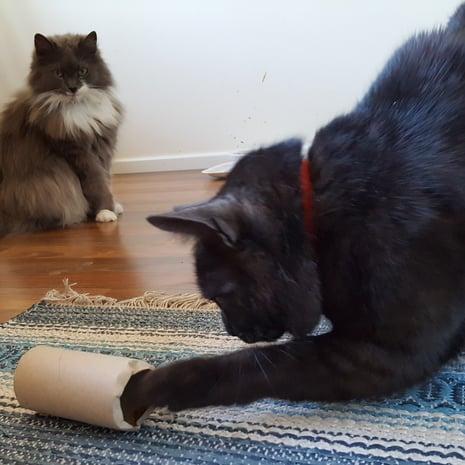 Kissanomistaja