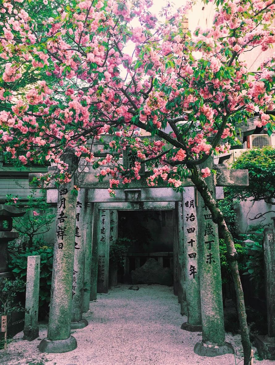 Kushida on kaunis ja suuri pyhättöalue, jonne kannattaa varata pari tuntia.