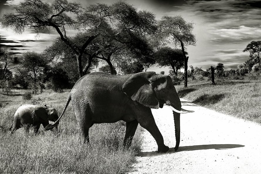 elephant-660058_960_720.jpg