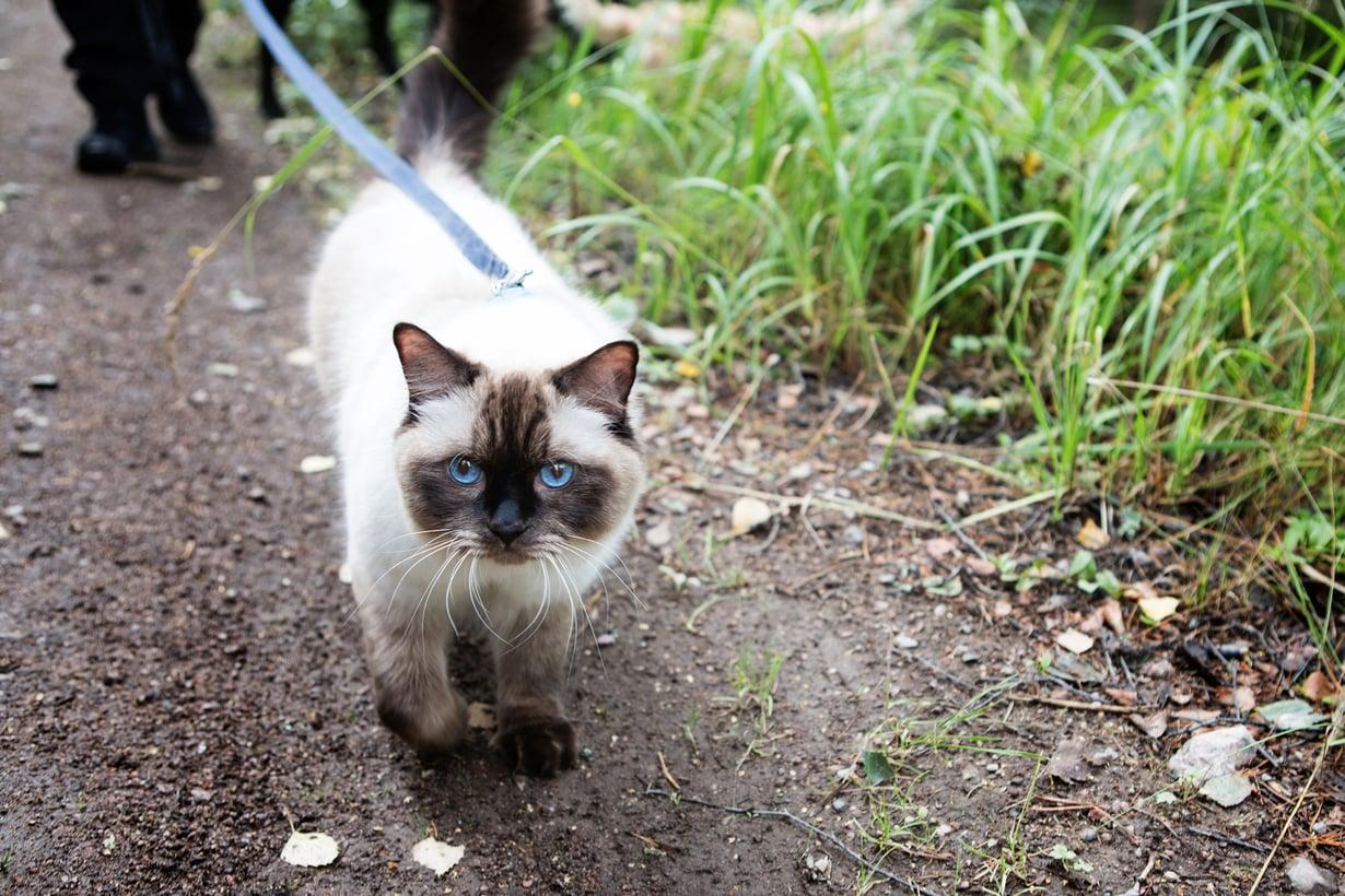 nainen yksi kissa
