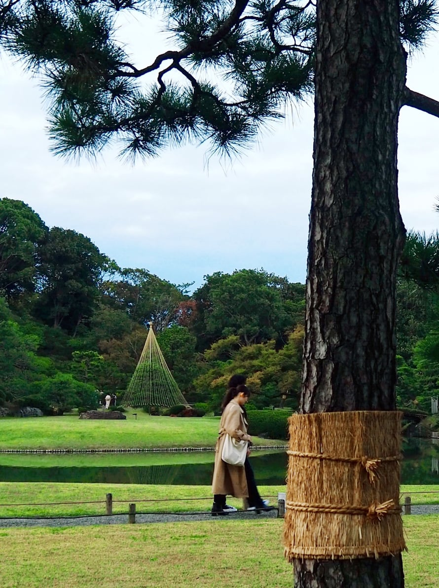 Hyönteiskauluri suojaa erityisesti mäntyjä, ja ne pysyvät vihreänä läpi vuoden, uskovat japanilaiset.