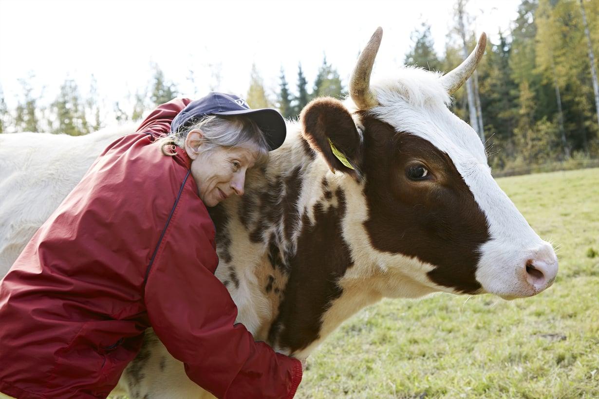 """Paulaa ja lehmiä yhdistää rakkaus rutiineihin. """"Lehmällekin pitää aina olla justiinsa samalla lailla."""""""